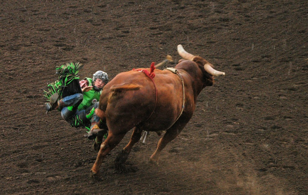 bulls day2