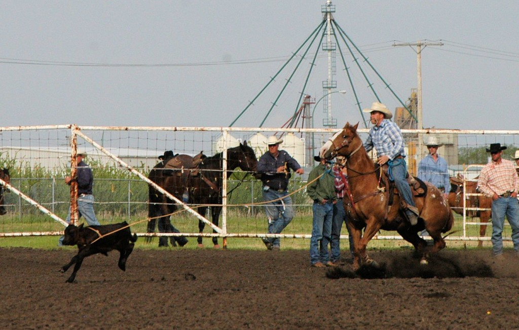 calf roping at Unity SK rodeo