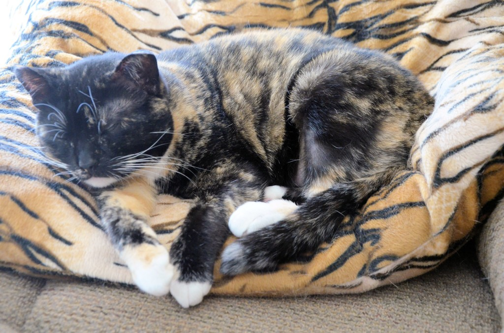 Camouflaged cat naps at KC Rescue in Unity, SK