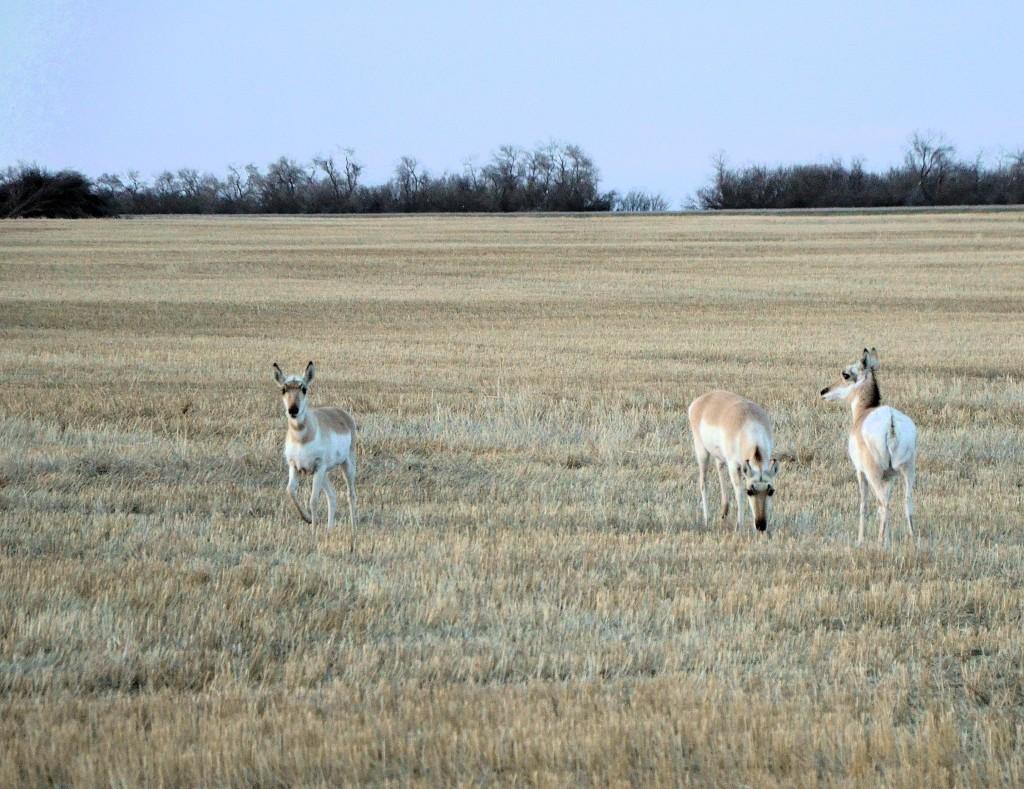 Saskatchewan crop land