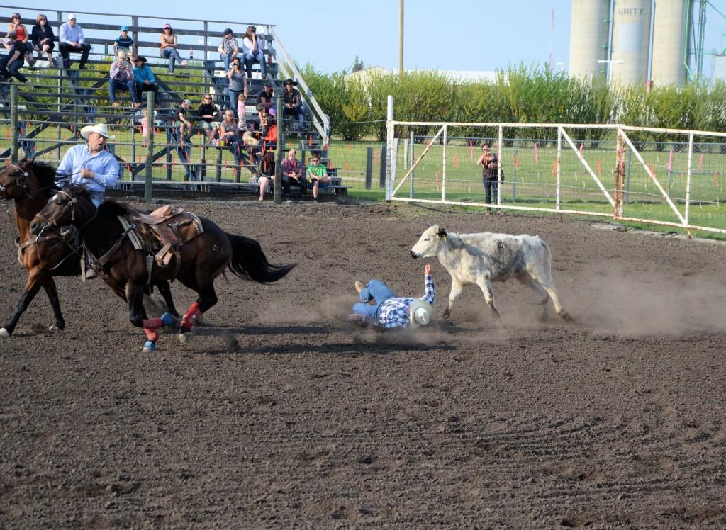 rodeo steer wins