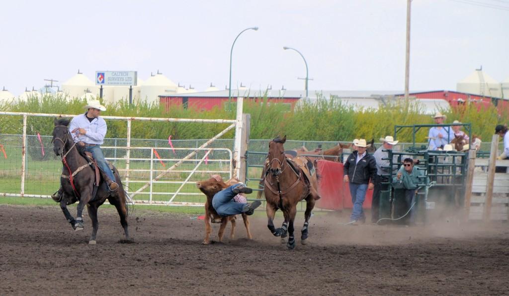 rodeo steer wrestling