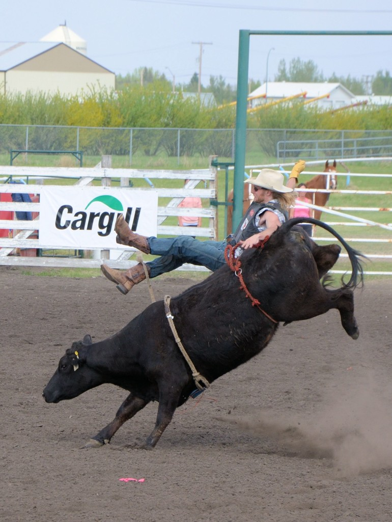 Celebrity Cow Riding at Unity SK