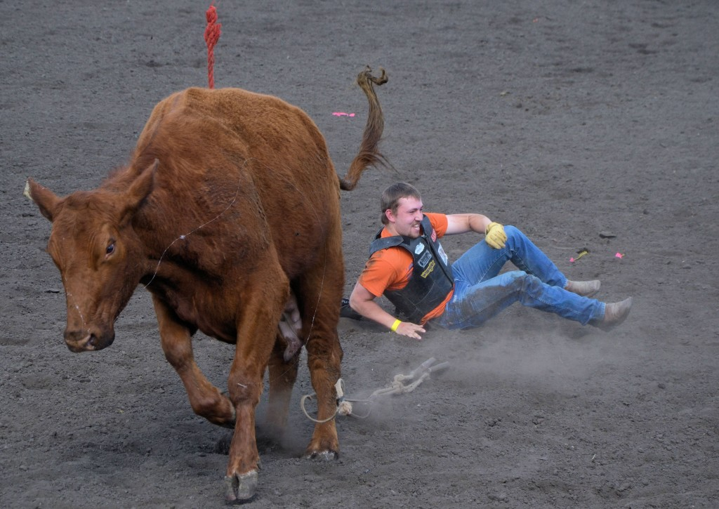 Cow 1 - Celebrity Bull Rider 0