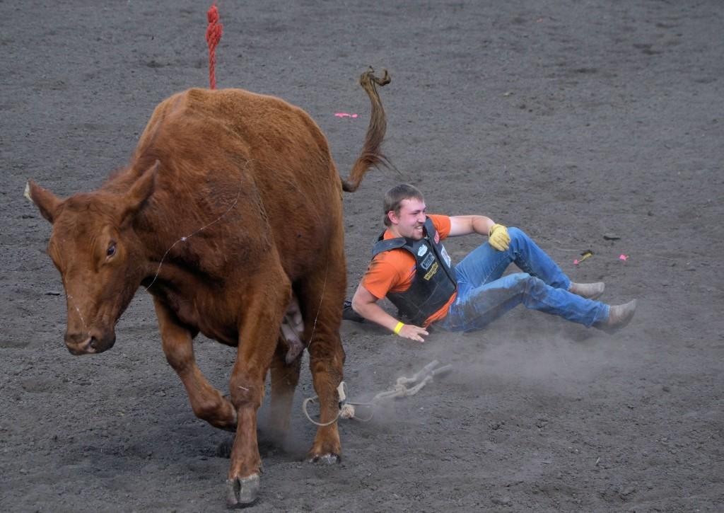 Cow 1 - Celebrity Bull Rider 0