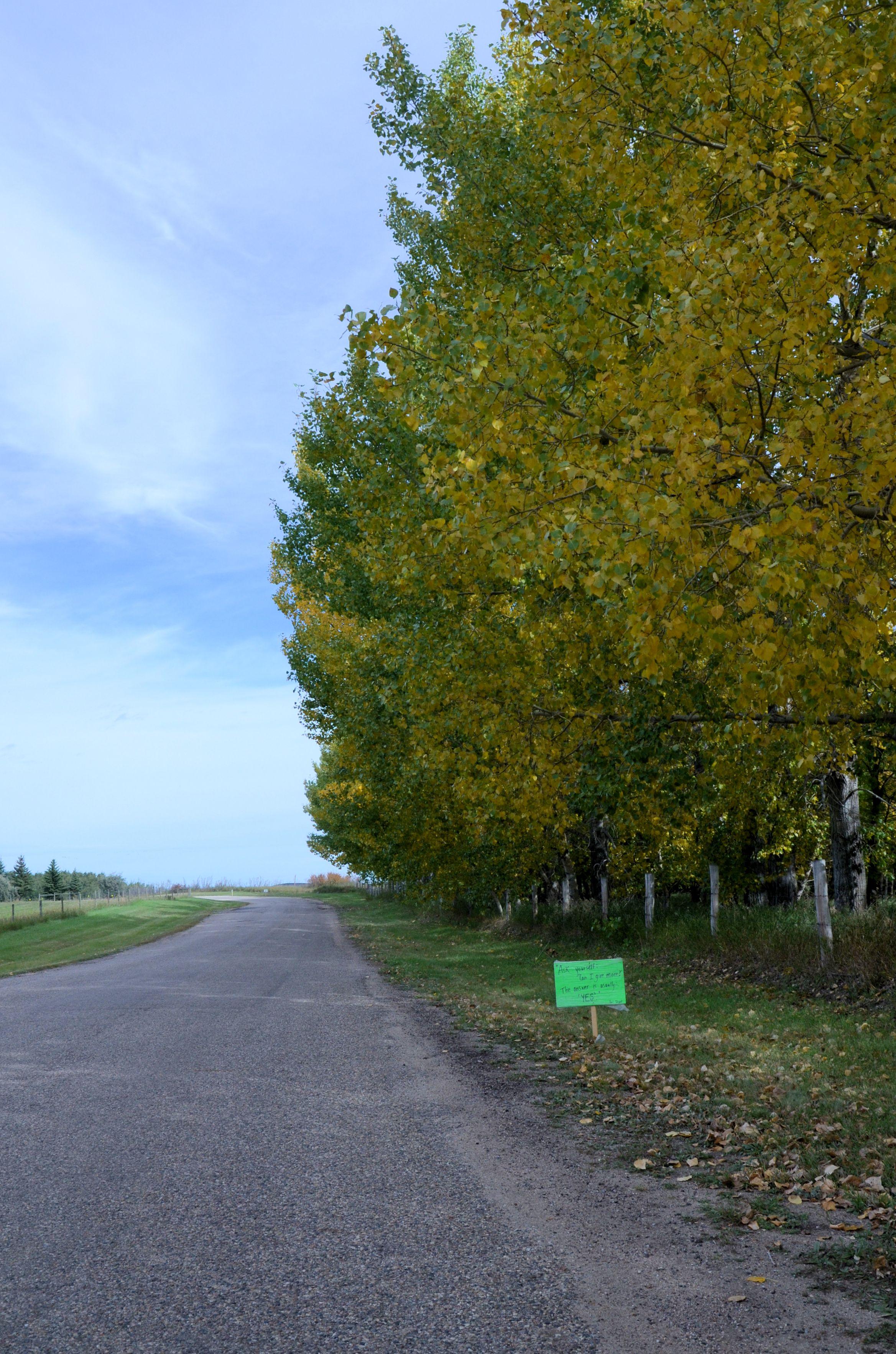 run sign & trees